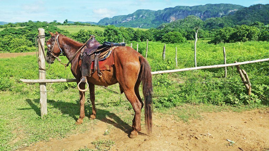 3 settimane a Cuba. Cavallo nella Valle di Vinales