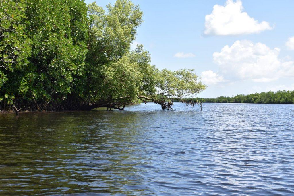 Zanzibar, foresta di mangrovie
